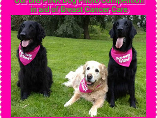 DOGS IN PINK COMPETITION
