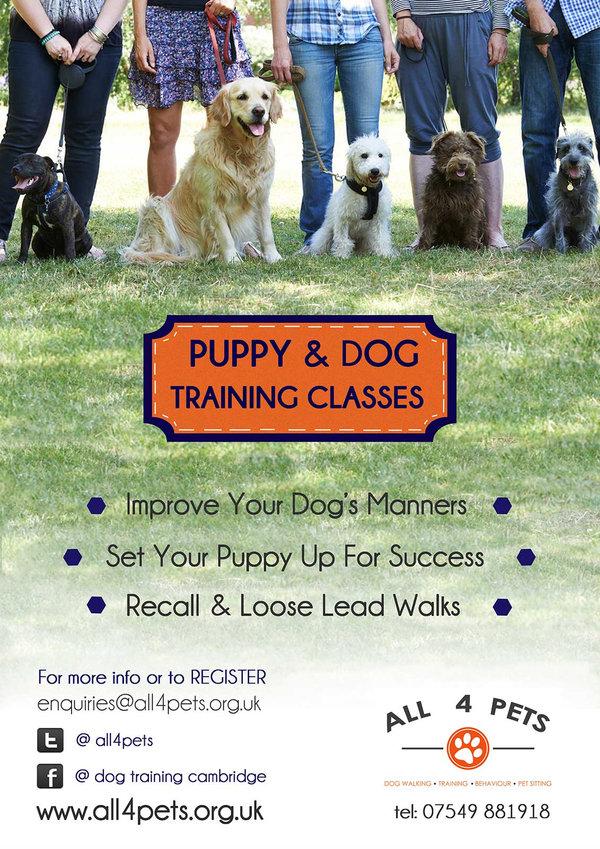 Dogs Dog Daycare Dog Training Puppies Puppy training
