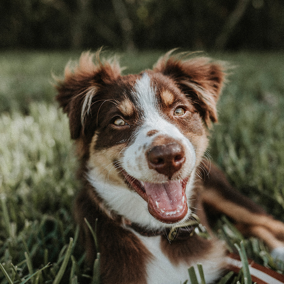 Fleas Ticks and Worms for Dogs