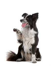 Exercise your dog through play