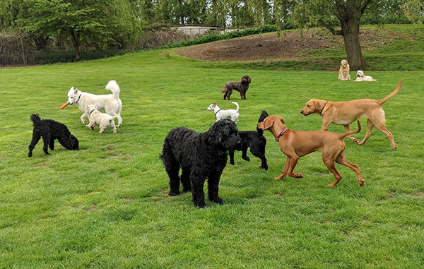 Oakington Dog Day Care Centre, Cambs
