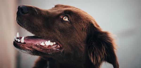 Dog dental care review