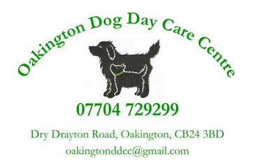 Dog Day Care Dogs Daycare puppies Oakington Cambridge Puppy