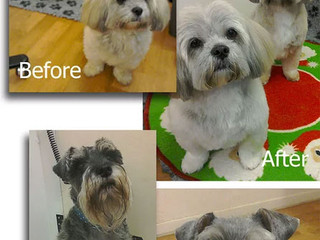 Spruced Goose Dog Grooming in Cambridge