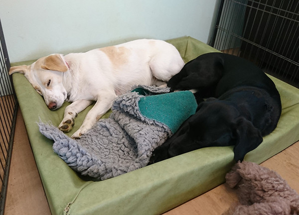 Oakington Dog Day Care Rest time