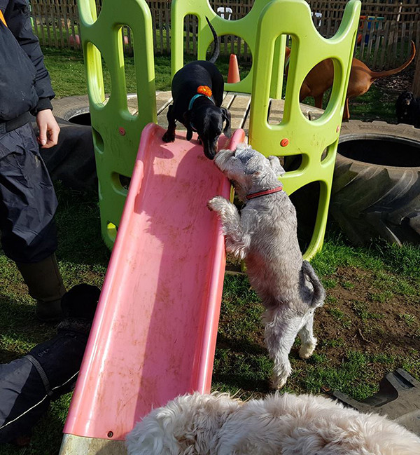 Oakington Dog Day Care Outdoor Play equipment