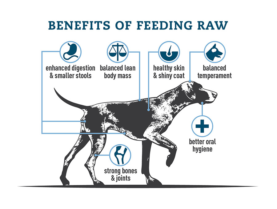 Benefits of feeding RAW