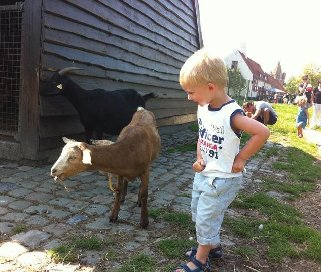kind kijkt naar geitjes.jpg