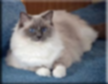 blue mitted rag.png