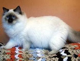 choc kitten.jpg