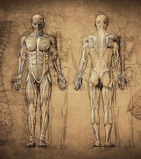 Anatomy Drawing_edited.jpg