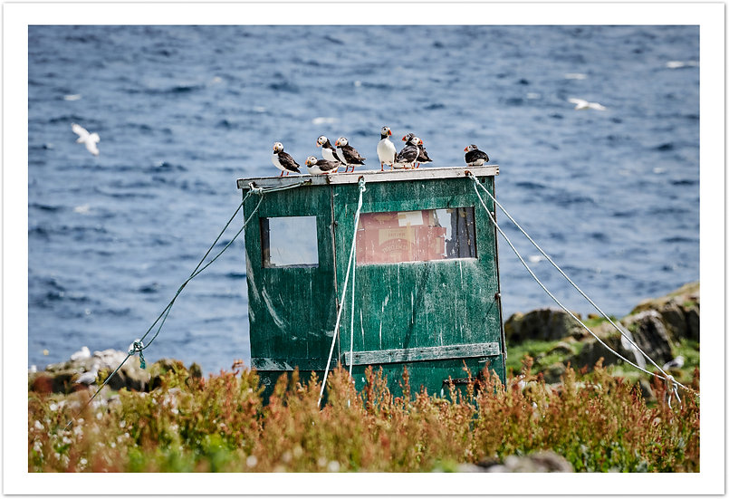 Puffin House, Isle of May