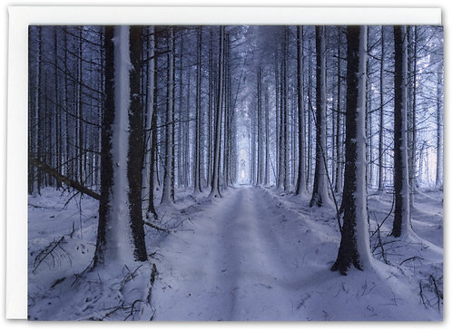Winter Woods, Shropshire