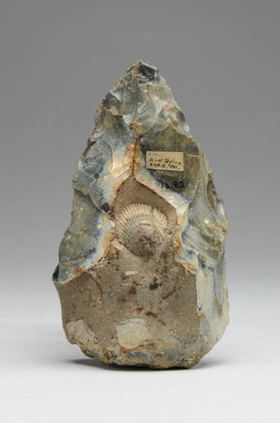 1916.82/Record 2, handaxe knapped around a fossil shell, Lower Paleolithic, Norfolk