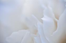 Fleurs_VeronikaZizka©213