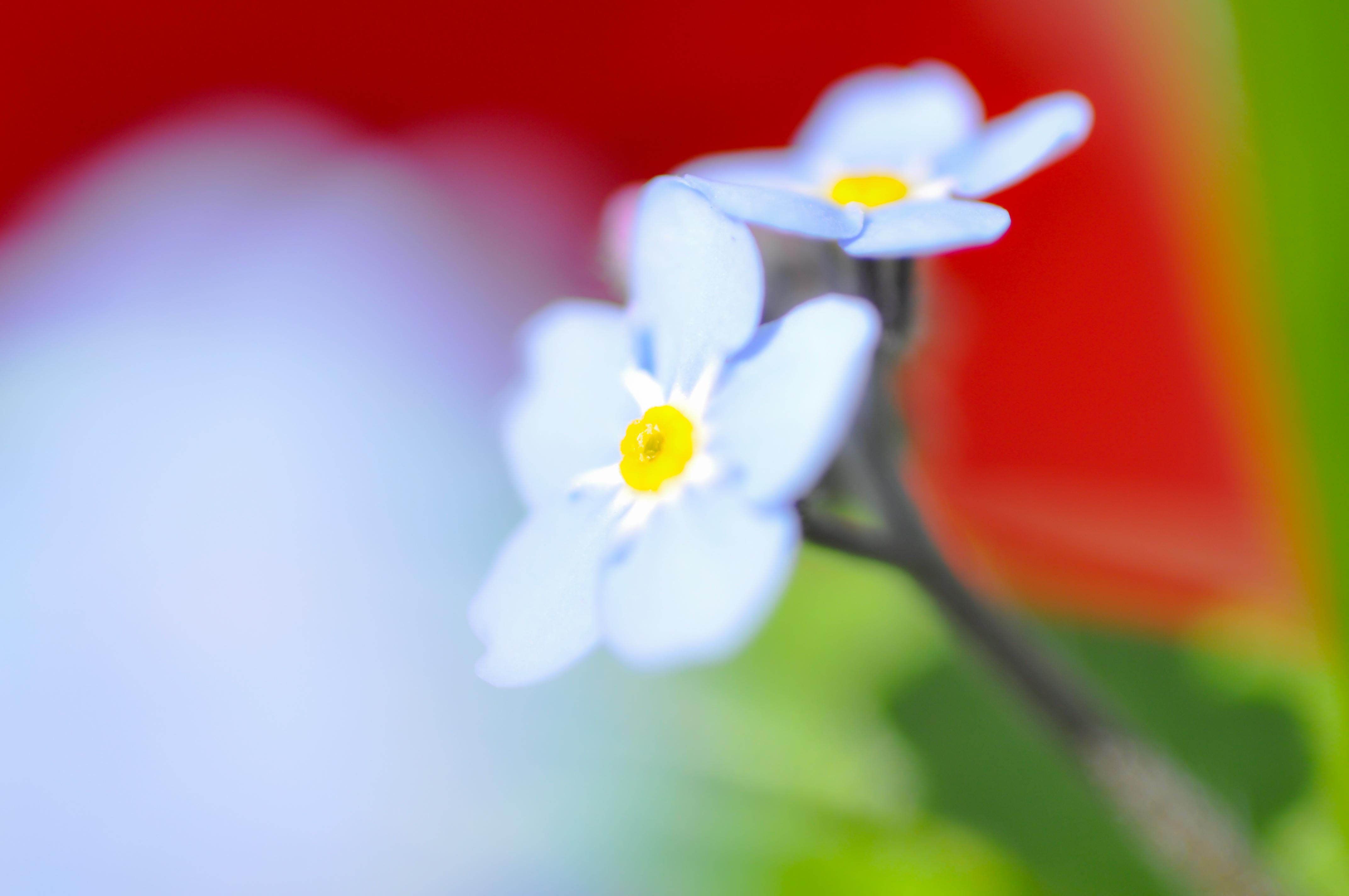 Fleurs_VeronikaZizka©081