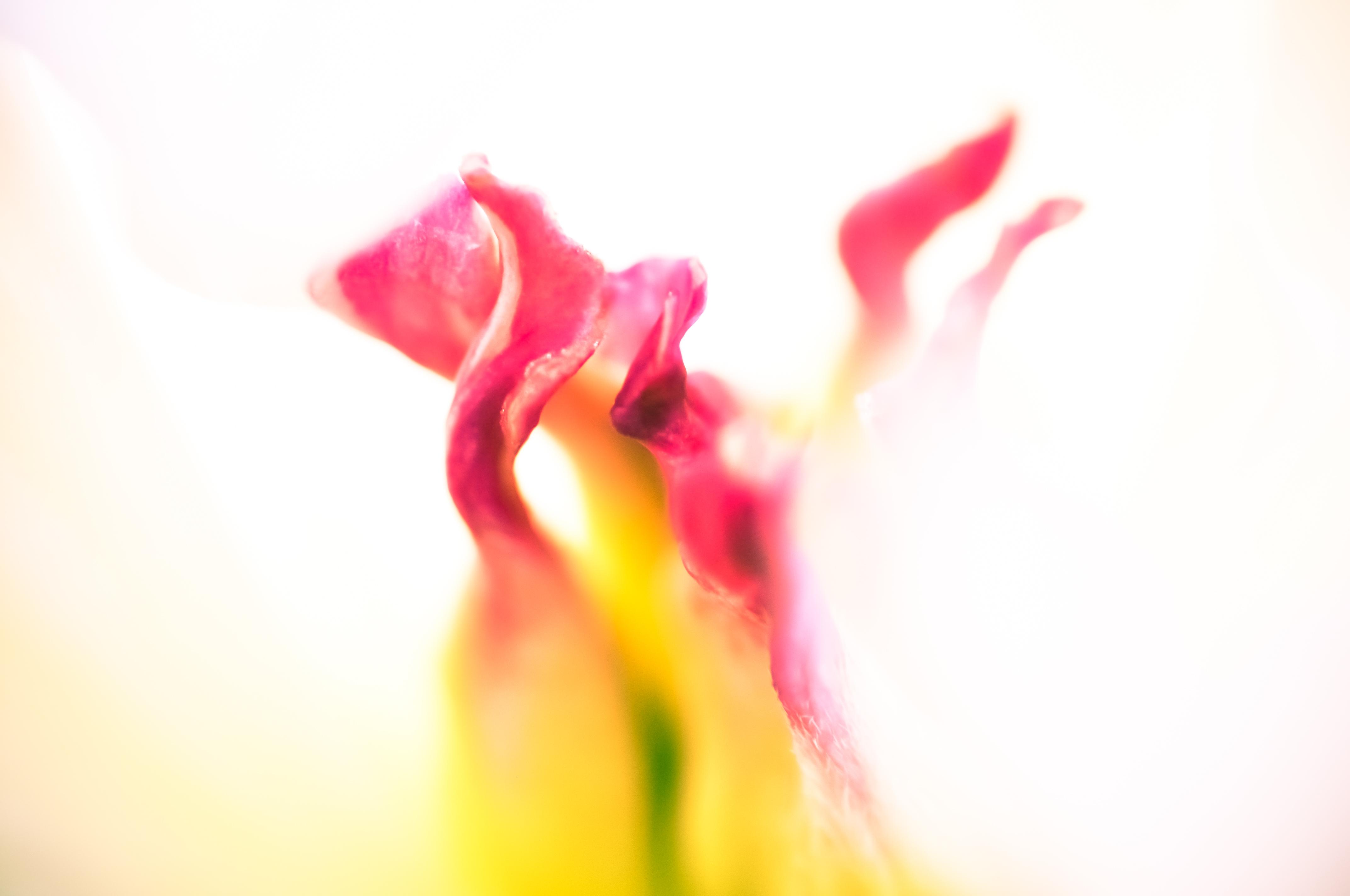 Fleurs_VeronikaZizka©209