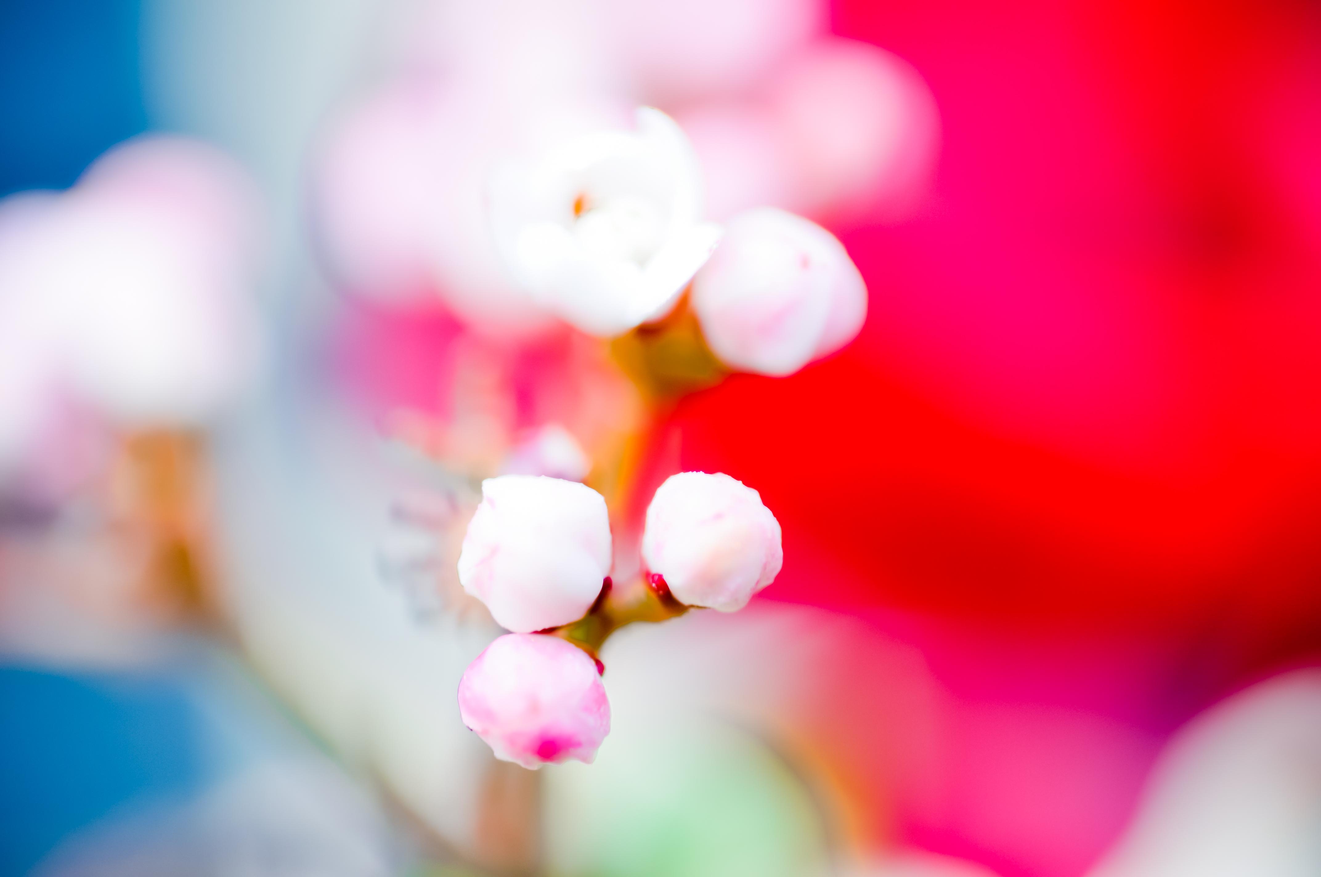 Fleurs_VeronikaZizka©072