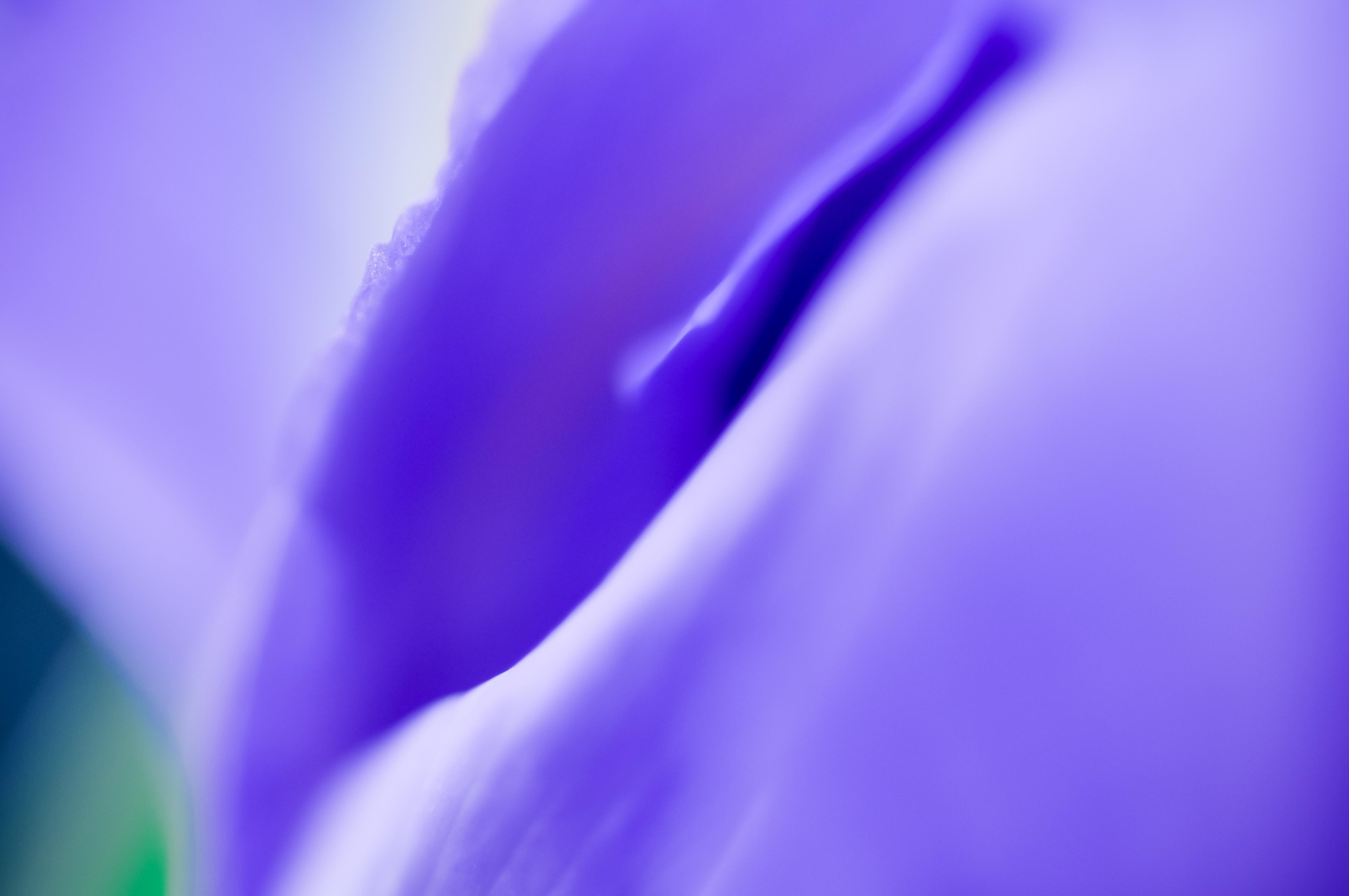 001_-_Fleurs_VeronikaZizka©151_(15)