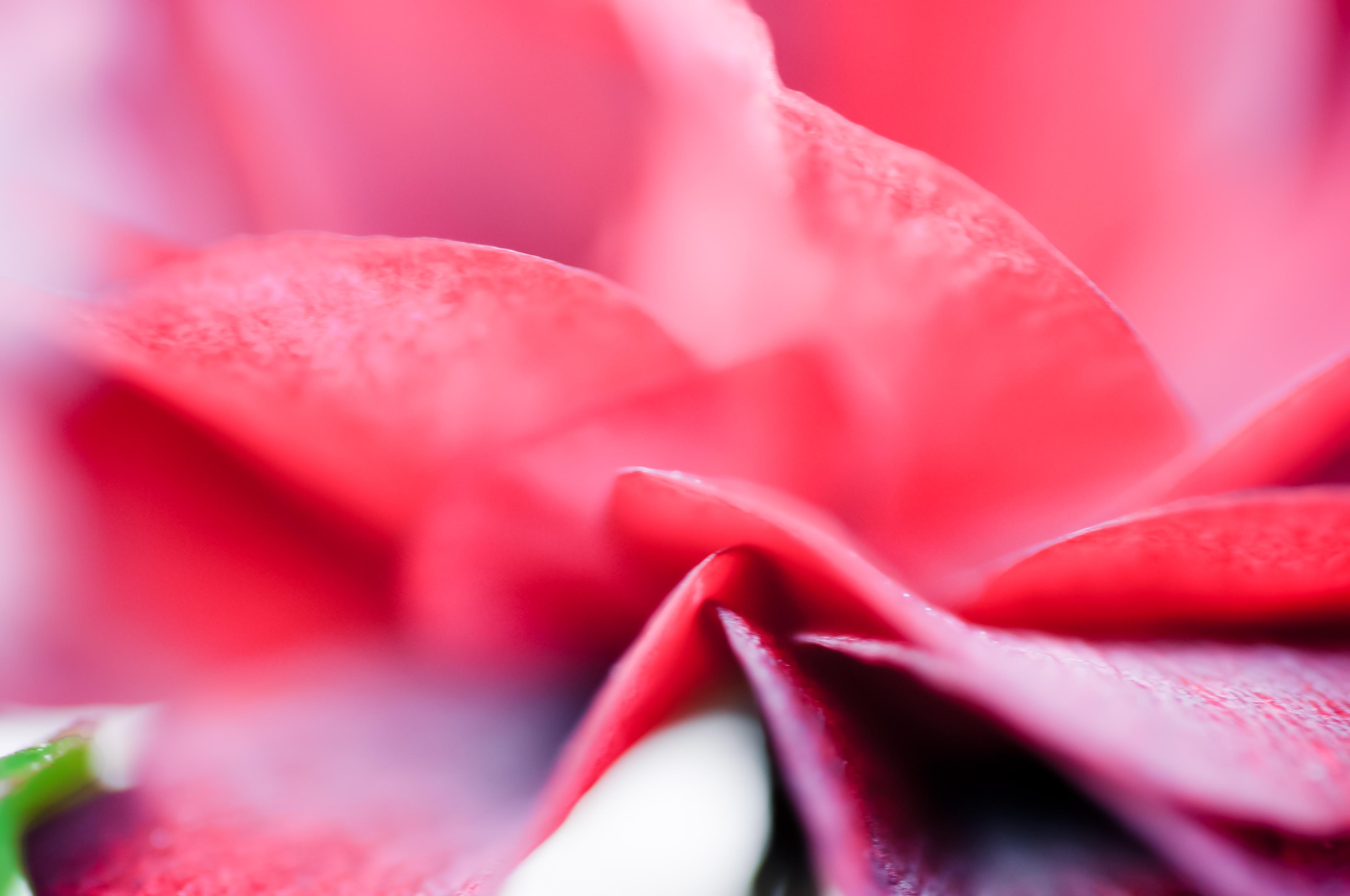 Fleurs_VeronikaZizka©071