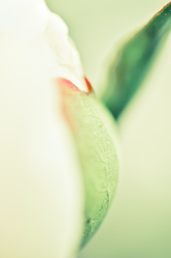 Fleurs_VeronikaZizka©224