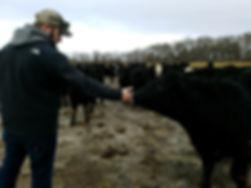 micharl&cattle.jpg