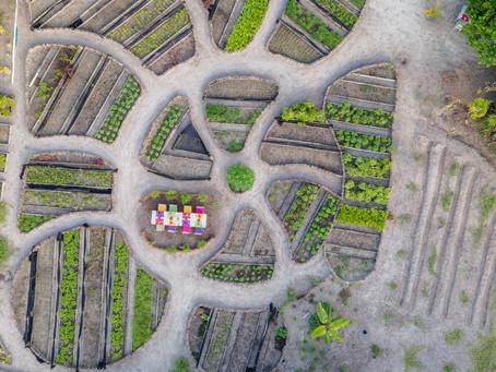 Green Fingers: Soneva Jani's Glorious Gardens