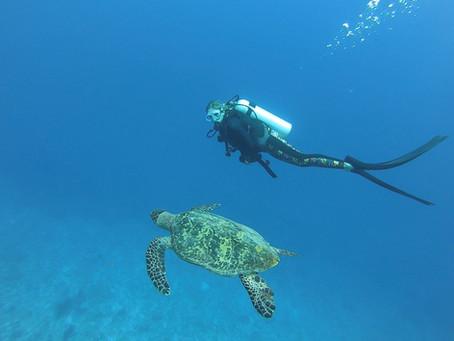 Diving Deep into the Maldivian Marine World: An Interview with Marine Biologist Ellie Butler