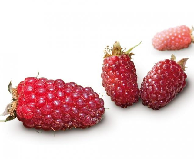 tayberries