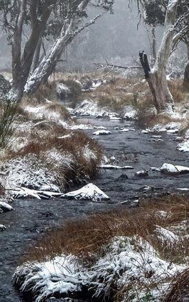 Barrington Snow.jpg