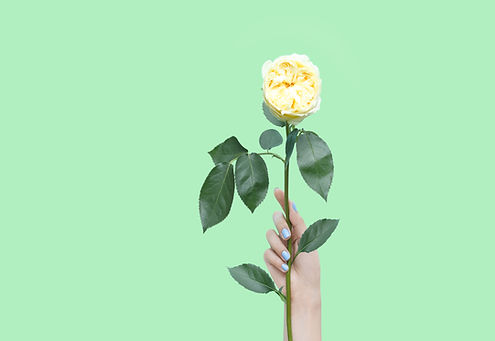 Hand holding a yellow rose