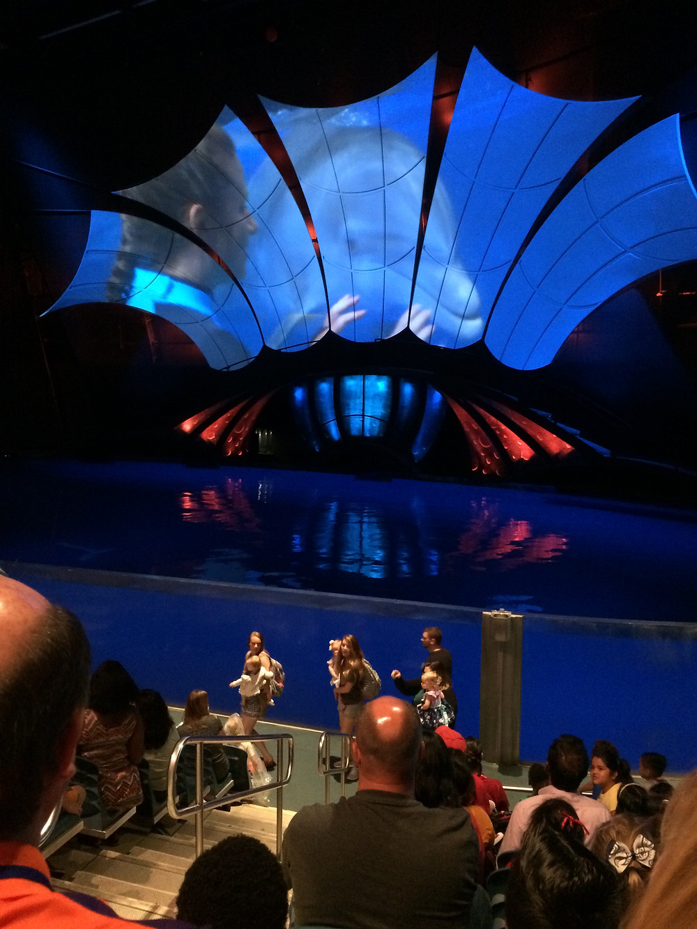 While visiting the aquarium in Atlanta, you definitely want to see the shows.