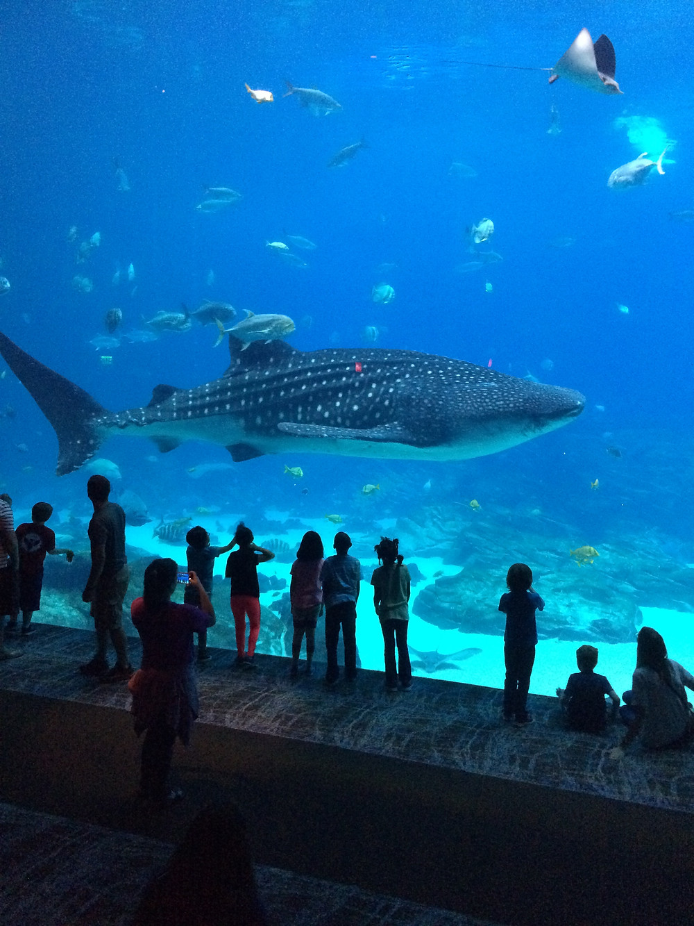 The Georgia Aquarium is one of the top things to do in Atlanta.