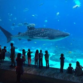 Reasons to Visit the Aquarium in Atlanta