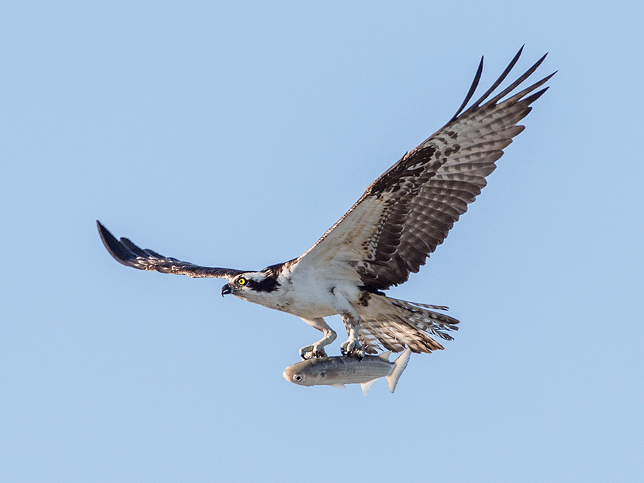 Bird_007.jpg