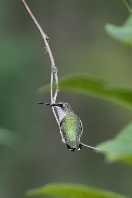 Bird_015.jpg
