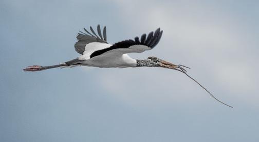 Bird_010.jpg