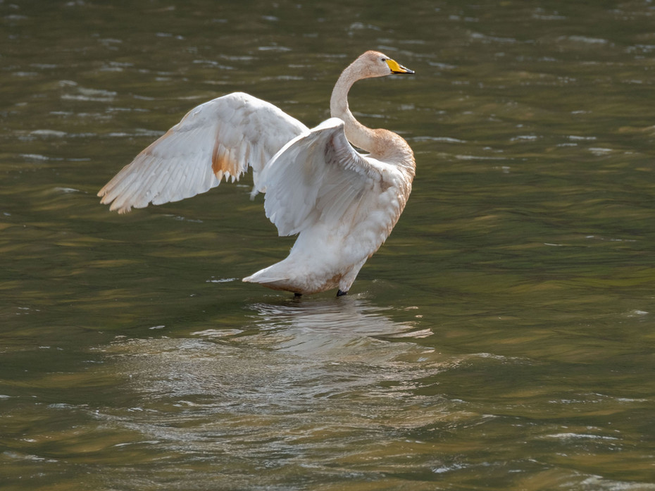 Bird_029.jpg