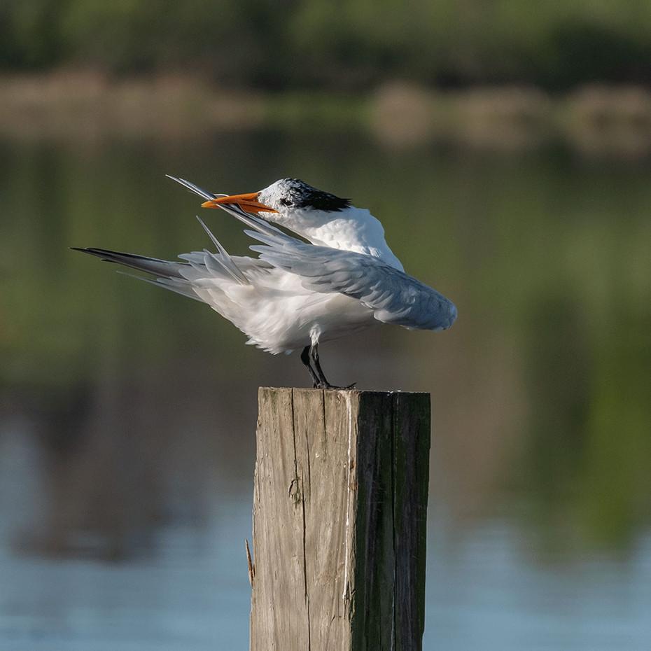 Bird_006.jpg