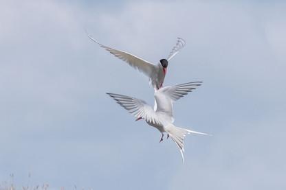 Bird_011.jpg