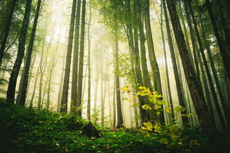 morning_light_by_hannes_flo_dauk3in-full