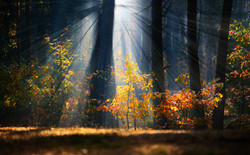 forest-photography-tips-1