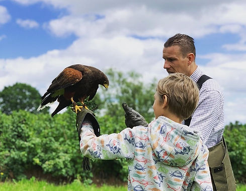 Wye valley falconry edit 1.jpg