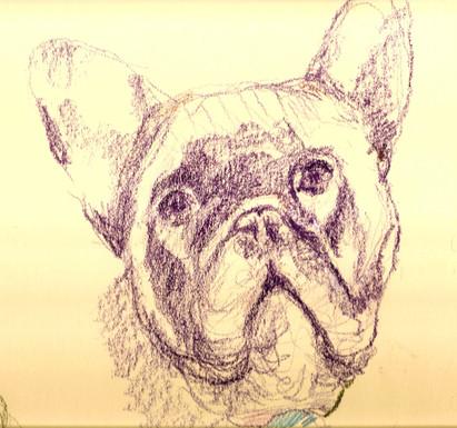 Frans sketch