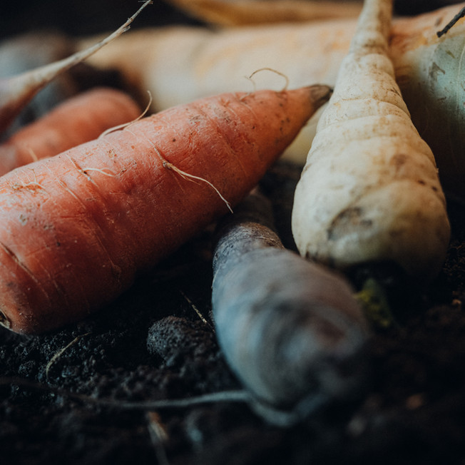 Karottenraritäten