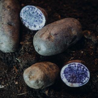 Lila Kartoffel