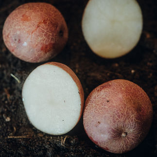 Helle Kartoffelsorte
