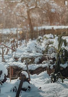 Ruhepause und Anbauplanung im Winter