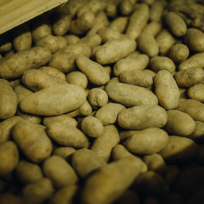 Viele Kartoffeln