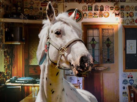 Horses Horses_web res_final.jpg